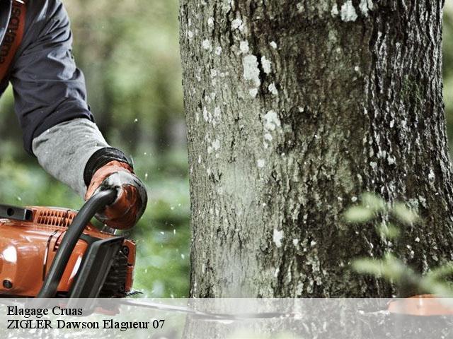 elagage d 39 arbres cruas t l. Black Bedroom Furniture Sets. Home Design Ideas